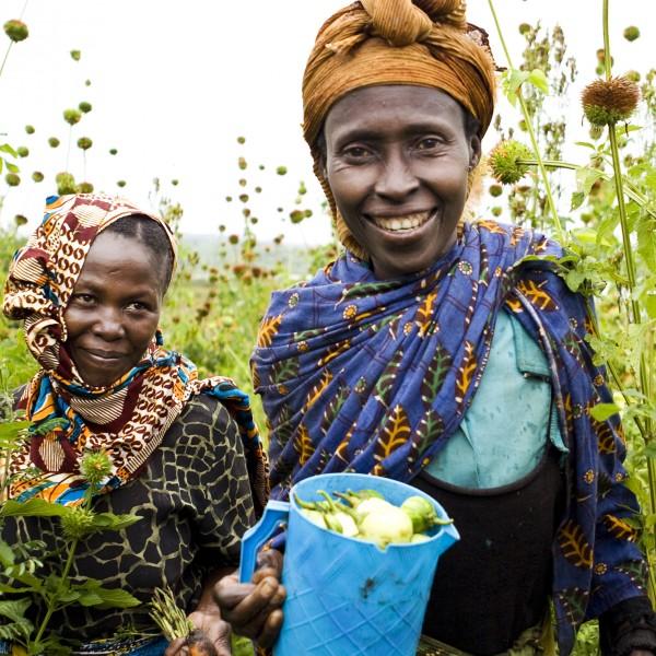 MAYAJA - Landsbyudvikling i Tanzania