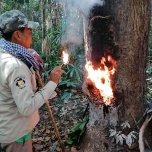Prey Lang-Skovens indbyggere: Når de ødelægger skoven har vi intet at leve af