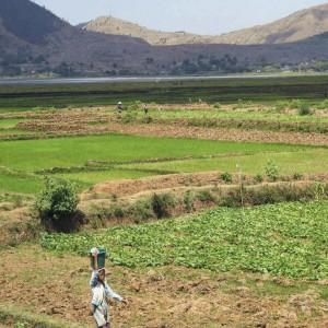 Stadig pladser på uforglemmelig Madagaskar-rejse til efteråret