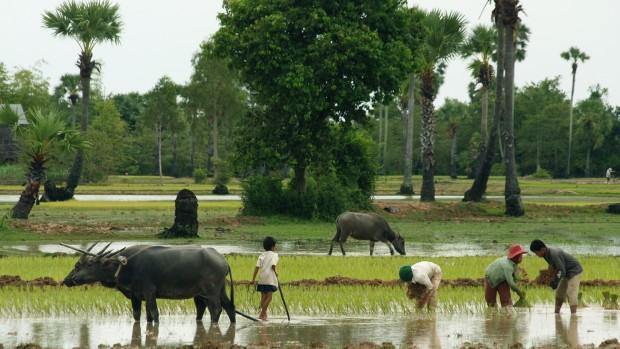 Danmission og Caritas bag nyt studie om udfordringer for bønder i udviklingslande
